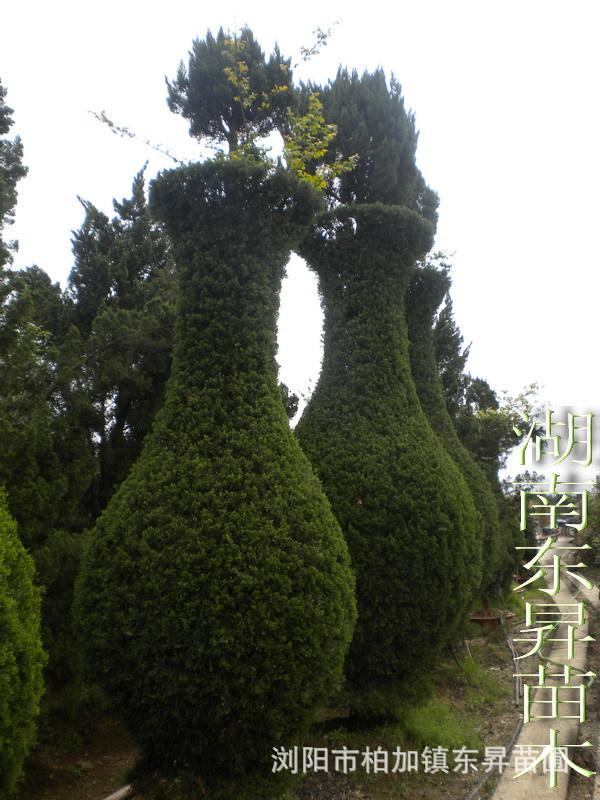 采购湖南苗木 湖南花木 乔木 灌木 请到东昇苗圃